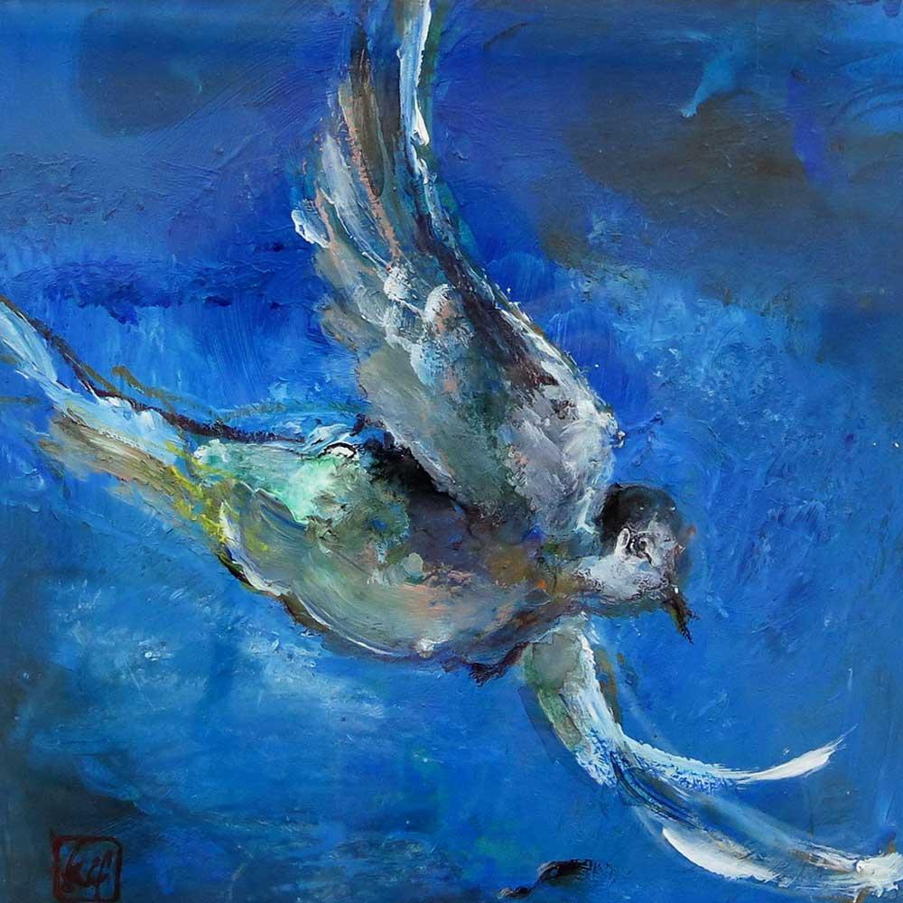 oiseau-40